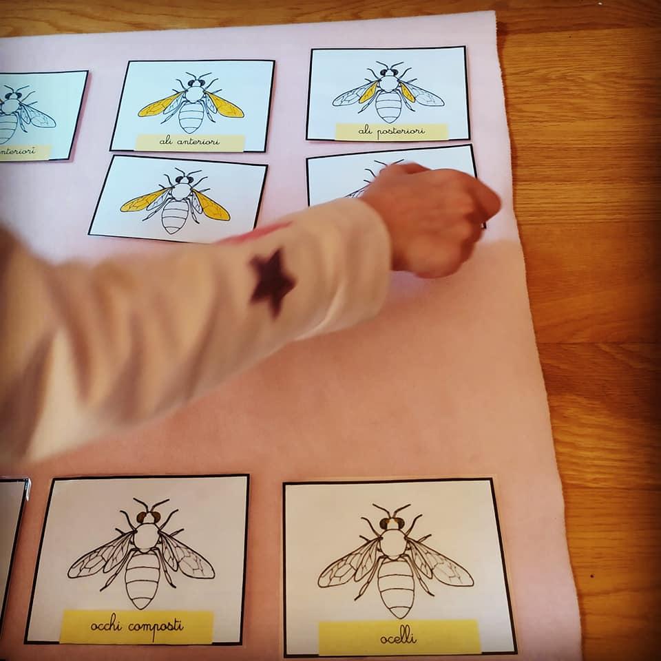 bambini-studio-api