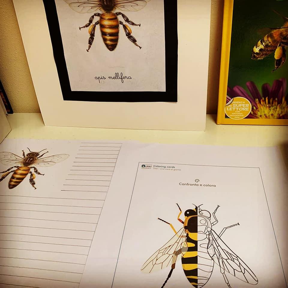studiare-api