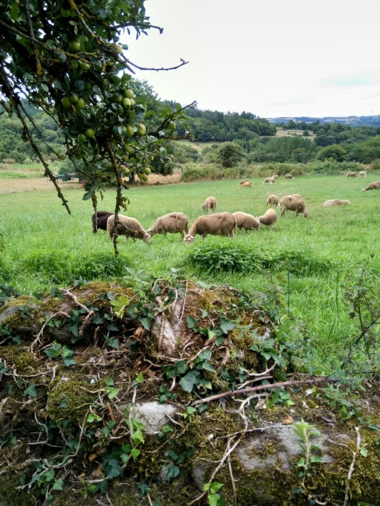 natura-santiago-compostela