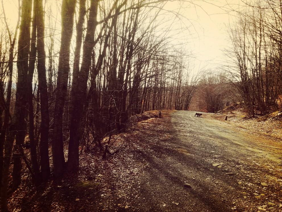 natura-fine-inverno