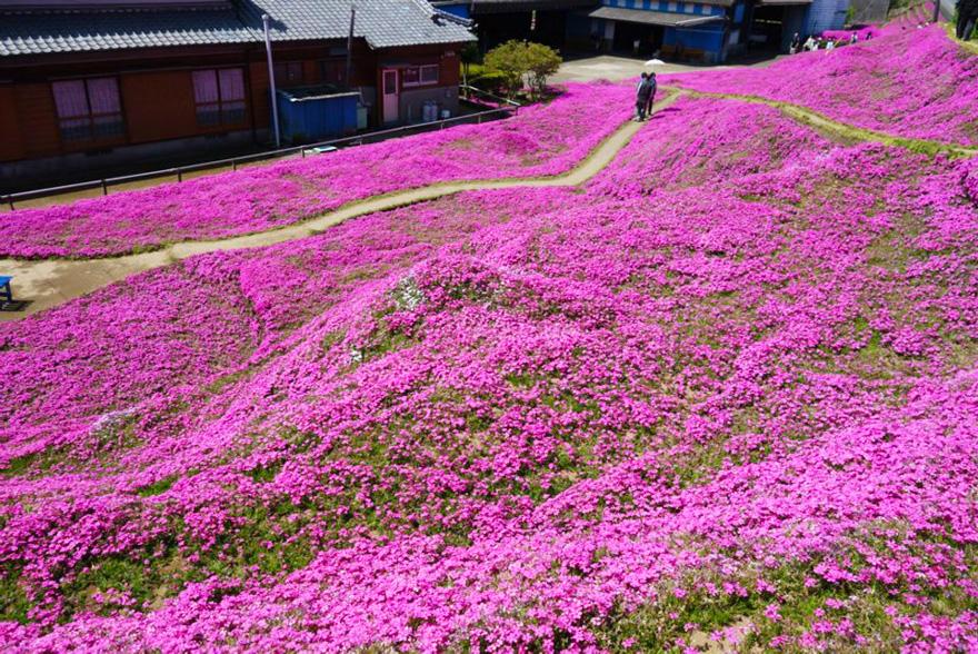 Toshiyuki Kuroki giardino