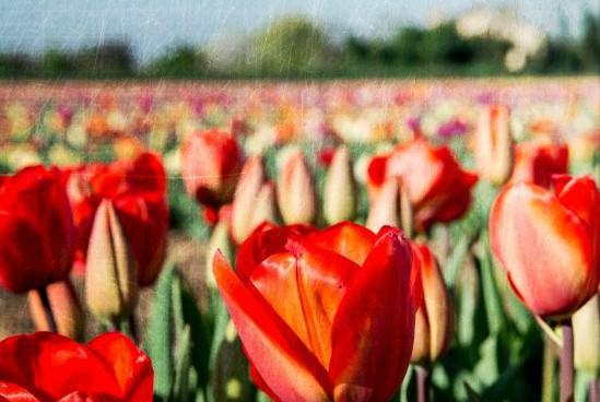 Primo giorno di primavera, Capodanno in Iran