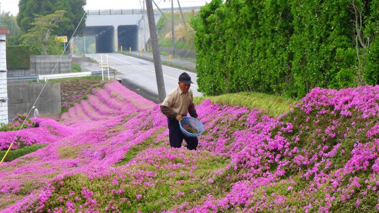 La primavera del signor Kuroki